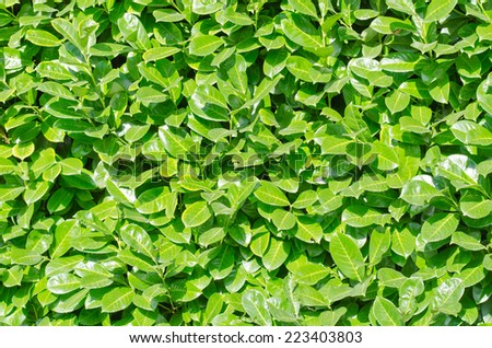 Living green wall in the bright sun - stock photo
