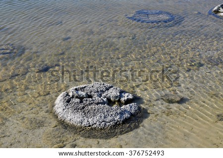 Stromatolites Stock Photos, Images, & Pictures | Shutterstock