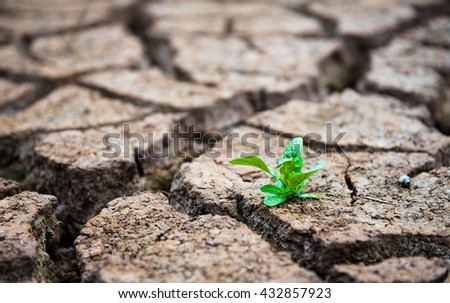 Living with Drought, Reborn tree, cracked ground - stock photo