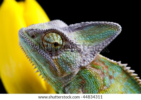 Lizard families - stock photo