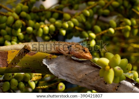 Lizards in the garden - stock photo