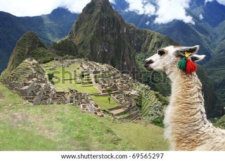 Llama at Historic Lost City of Machu Picchu - Peru - stock photo
