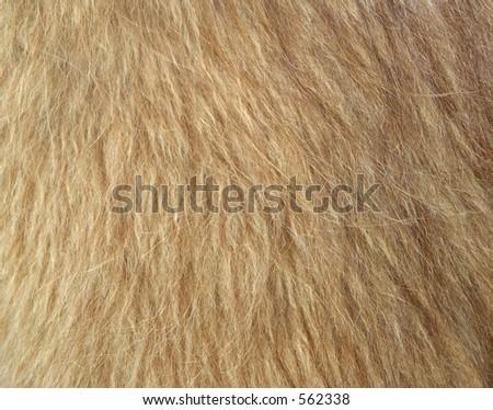 Llama Wool - stock photo