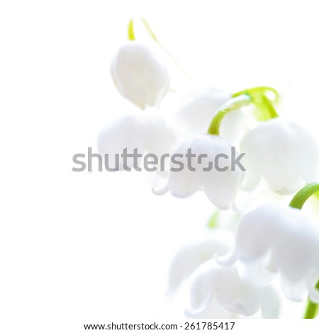 Llies of the valley on white isolated background  - stock photo