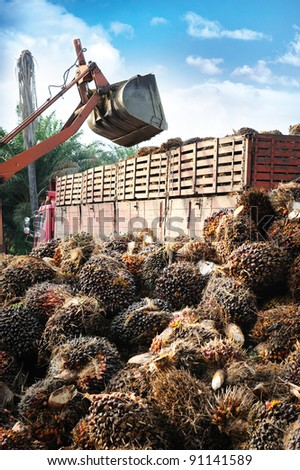 loading Palm Oil fruits - stock photo