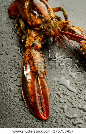 lobster over black stone - stock photo