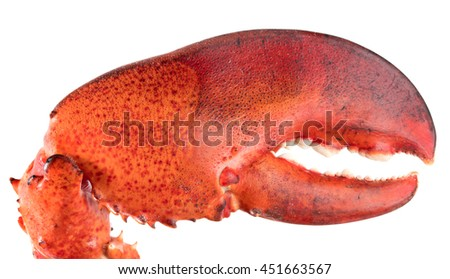 Lobster's claw - stock photo