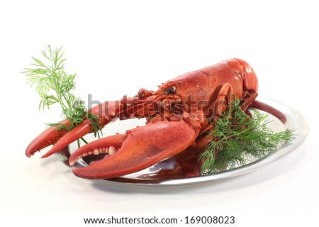 lobster with dill - stock photo