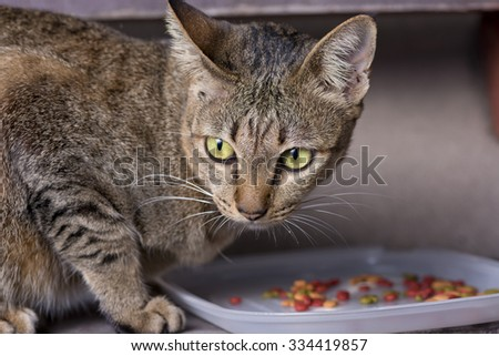 Local cat eating food from a bowl. - stock photo