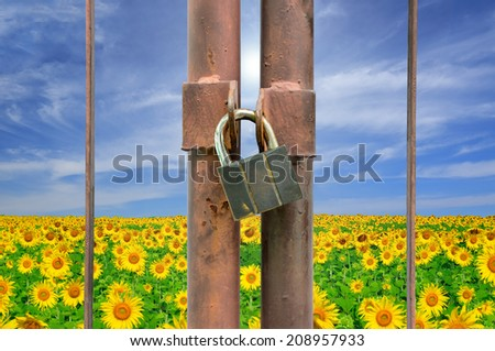 lock key on rusty fence and flower plant background - stock photo