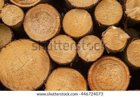 Log lumber timber trees round rings pine spruce tree-ring detail close-up - stock photo