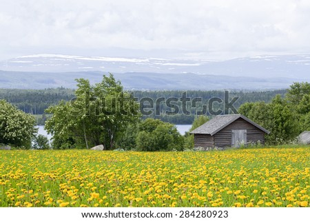 Log, timber barn on the farmland, landscape. Great-Lake area and mountains in the background. Dandelions this side. - stock photo