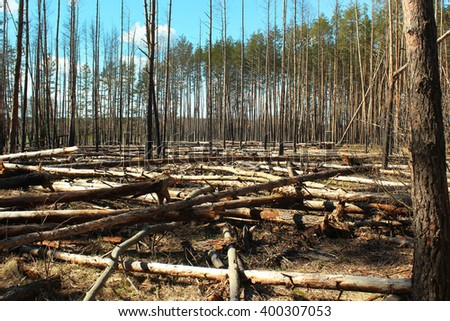 Logged area in a pine forest - stock photo