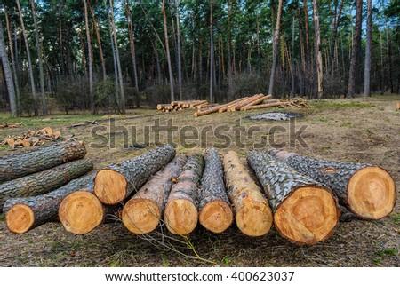 Logging and deforestation - stock photo