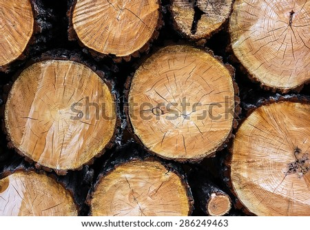 logging log trees with knots closeup background - stock photo