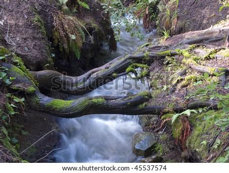 Logs across stream - stock photo
