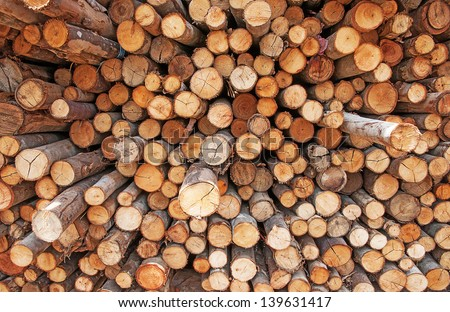 Logs of eucalyptus on a pile - stock photo