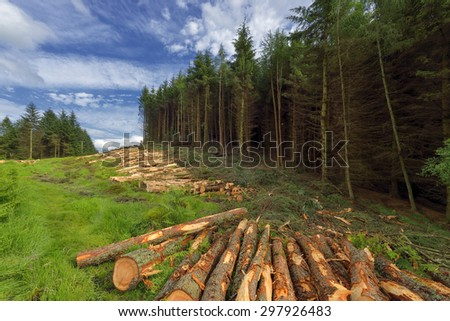 logs of trees in the forest after felling, Scotland ,  Dollar Glen - stock photo