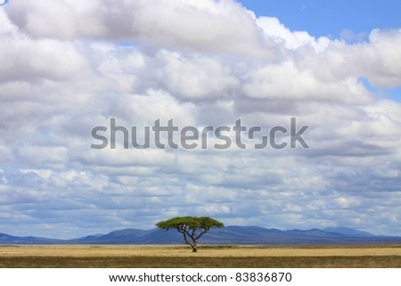 Lone Acacia tree in the middle of a beautiful expanse of savanna plain, Amboseli National Park, Kenya - stock photo