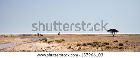 Lone acacia tree standing in grasslands in Etosha national park; Namibia - stock photo