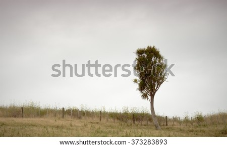 lone cabbage tree or ti growing on a hill top, summer landscape, Tolaga Bay, East Coast, North Island, New Zealand  - stock photo