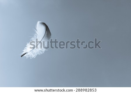 Lone feather in the sky.  - stock photo