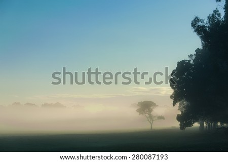 Lone gumtree in fog covering pasture in open Australian farmland  under blue sky and behind silhouettes of dense row of foreground trees - stock photo