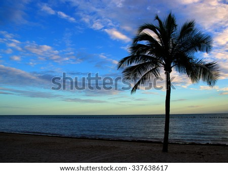Lone Palm: Lone palm tree on sandy beach silhouetted against soft blue and pinks of a sunset. - stock photo