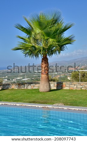 Lone palm on a summer vacation - Palm tree by the pool with the Cretan mountains in the background in Malia, Crete near Heraklion - stock photo