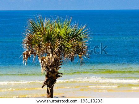 lone palm tree at the beach - stock photo