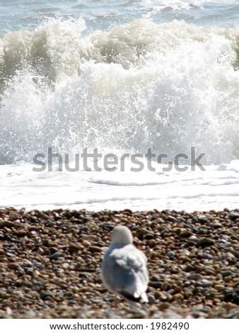 Lone Seagull - stock photo