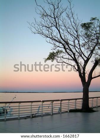 lone tree at rosario - stock photo