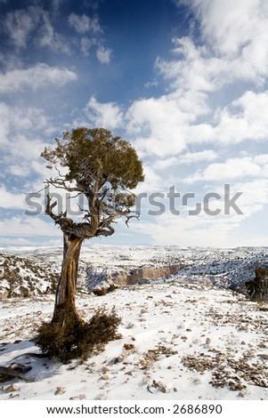 lone tree braving the brutal winters and harsh summers at the bighorn canyon, wyoming - stock photo