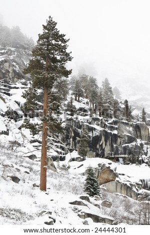 Lone Tree in the Snow - stock photo