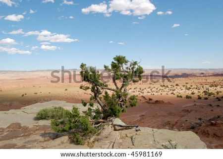 lone tree on the edge of a cliff overlooking the desert in colorado - stock photo