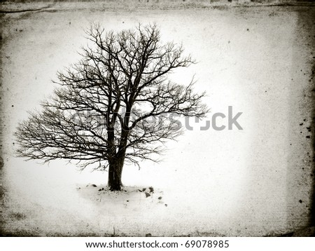 lone tree without leaves  in winter - stock photo