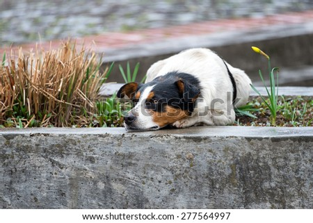 Lonely and sad homeless dog lying on the street - stock photo