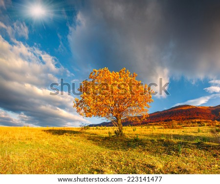 Lonely autumn tree against dramatic sky in the mountains - stock photo