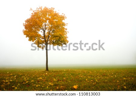 lonely autumn tree and fog - stock photo