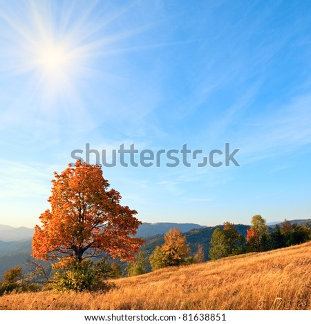 Lonely autumn tree on Carpathian mountainside (and evening sky with sun and some  clouds). - stock photo