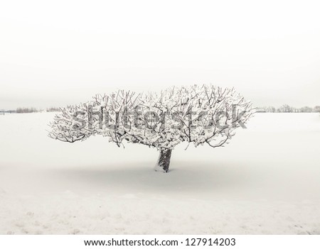 Lonely bare snow covered tree in snow - stock photo