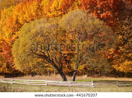 Lonely beautiful autumn tree. Nature Landscape - stock photo