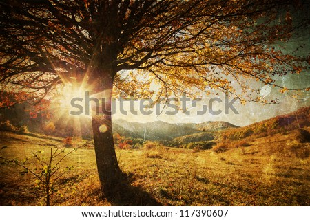 Lonely beautiful autumn tree - vintage photo - stock photo