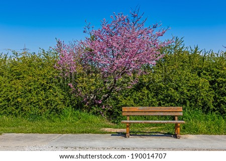 Lonely bench at park against a blue sky in Spring - stock photo