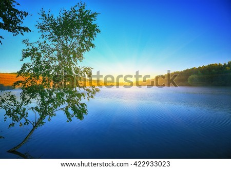 Lonely birch tree growing in a pond at sunrise. blue sky - stock photo