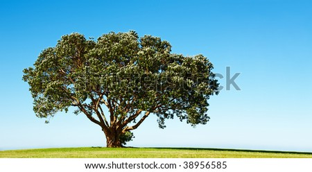 Lonely blossoming tree on the green field - stock photo