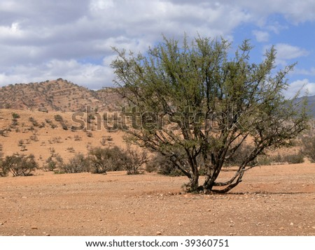 lonely bush in the southern Atlas Mountains, Morocco - stock photo
