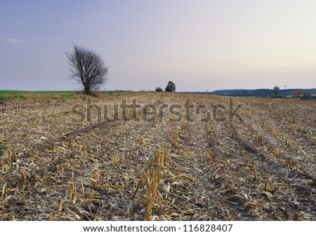 lonely bush on cornfield stubble at sunset - stock photo