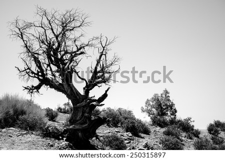 Lonely dead tree. Art nature - stock photo