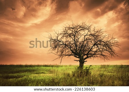 Lonely dead tree. Art nature. Infrared style. - stock photo